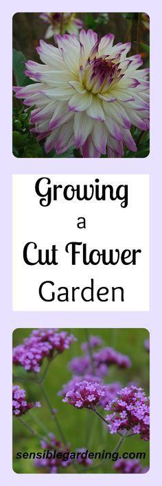Growing a Cut Flower Garden with Sensible Gardening