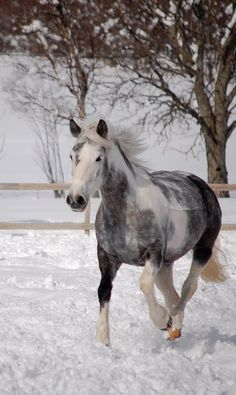 * *> A horse loves freedom, and the weariest old work horse will roll on the ground or break into a lumbering gallop when he is turned loose into the open. ------------------------- [Gerald Rafferty