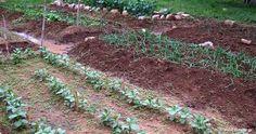 Κηπουρικές εργασίες ανά μήνα   Οι σπορές, τα φυτέματα, τα κλαδέματα, οι εμβολιασμοί και οι λοιπές κηπουρικές εργασίες  πρέπει να γίνονται... Stepping Stones, Diy And Crafts, Home And Garden, Outdoor Decor, Nature, Plants, Gardening, Cook, House