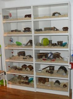 convert bookshelf into rodent/small animal habitat (I'd cut holes and add ramps to get to dif levels) Hamster Habitat, Reptile Habitat, Reptile Room, Reptile Cage, Hamsters, Pet Rodents, Gerbil, Guinea Pig House, Hamster House