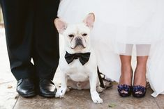 Dog-Friendly Wedding Venues That Are Actually Dog-Friendly