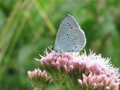 July Butterflies - Africa Gómez - Picasa Web Albums