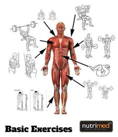 Basic Essential Exercises..  Stick to them and make a habit. You will surely reach your goals.  www.nutrimed.co.in