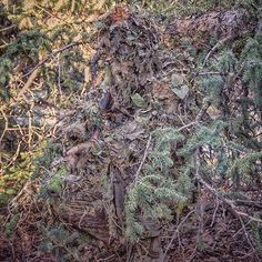 Some interesting pine Forrest camouflage looking good if you ask me