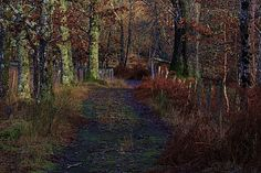 Photo by ianmackenzie My Photos, Country Roads, Plants, Plant, Planets
