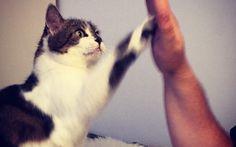 Mein Einstieg ins Clickertraining mit meiner Katze