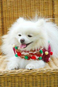 Christmas Dog Clothes #pomeranian #dogclothing #dogs #sweater #myknitt #pets #handmade #crochet