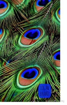 Peacock, feathers, close up, colorful wallpaper Blue Butterfly Wallpaper, Peacock Wallpaper, Abstract Iphone Wallpaper, Bird Wallpaper, Colorful Wallpaper, Peacock Painting, Peacock Art, Peacock Feathers, Animales