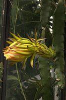 Gallery of Cacti (Cactaceae) Woodpecker Feeder, Cactus Names, Barrel Cactus, Planting Succulents, Cacti, Yellow Flowers, Plants, Cactus Plants, Planters