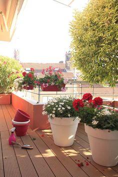 pots à fleurs blancs avec des géraniums et marguerites et jardinières à suspendre par la rampe