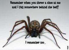 AAAAAAAAAAAAAAAHHHHHHHHH!!!!!!!!!!!!!!!!!!!!!!!!!!!!!!!!!!!!!!! spiders. they are scary