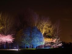 england,great,britain,syon,park,enchanted,woodland,trees,night,evening,lights,lighting,colorful,colors,effect,effects,sky,reflections,beautiful,enchanting,destinations,landmark,nature,outside,country,countryside,water,