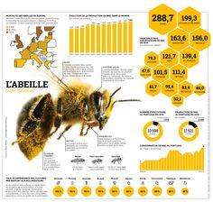 La pollinisation, assurée notamment par les abeilles mellifères, permet la reproduction de 80% des végétaux. Et notamment des cultures de céréales, de légumes et de fruits.