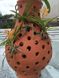 Custom terracotta vase for vanda orchid