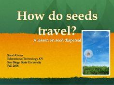 Need a seeds of sarah essay?