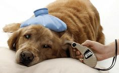 Health Tips: The Symptoms of Canine Diabetes