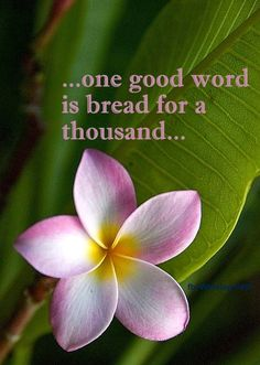 """""""Speak nourishing thoughts and reap the fruits of love"""" ~RaineDrops   Www.RaineVance.com"""