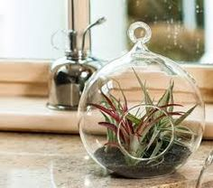 Image result for glass fish bowl terrarium ideas for air plant