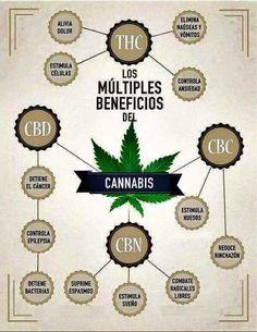 Beneficios del cannabis