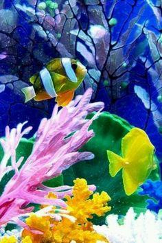 Pretty fish and coral