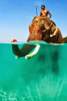 """Swimming Elephant amazing creatures - Andaman Islands - Hi, I'm Emmy and I love to travel the world. If you want to become a member please leave a message on my message board. Enjoy and """"Bon Voyage""""! Oh The Places You'll Go, Places To Travel, Places To Visit, Taj Mahal, Andaman And Nicobar Islands, Deep Blue Sea, Belle Photo, Maldives, Dream Vacations"""
