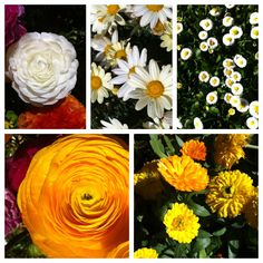 White and yellow spring flower inspiration board
