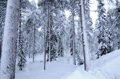 Bosque Frío o Taiga