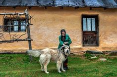 Romanian Shepherdd Dog