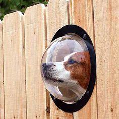 Pet Peek Window ~ part creepy, part awesome