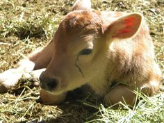 farm animals | Category Archives: farm animals