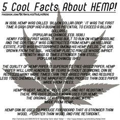 Hemp. The things you can do with a simple plant!