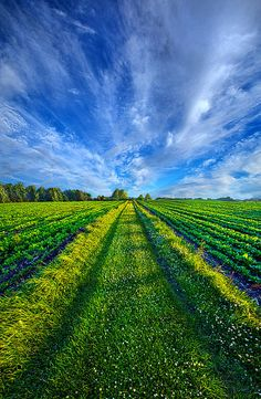 Some Days The Way Is Clear By Phil Koch - (fineartamerica)