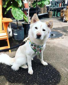 Coconut on Instagram: #dogsofinstagram #cutepetshots #cuteanimalshots #petsoftheday #petslovers  #dogloversclub #dogloversonly #dogloversunite #dogloverforever #pupperdoggo #gooddoggo #cutedoggo #puppyfun #puppydaily #puppypic #puppyofinsta #puppydays #puppiesoftheday #puppiesdaily #puppieslover Animals And Pets, Cute Animals, Pupper Doggo, Plant Nursery, Cat Day, Best Dogs, Cats Of Instagram, Cat Lovers, Corgi