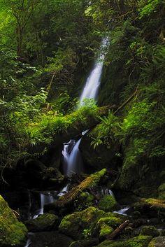 ✯ Merriman Falls - Quinault, WA