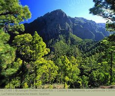 Caldera de Taburiente, La Cumbrecita 1287m, , La Palma Kanarische Inseln, Spanien