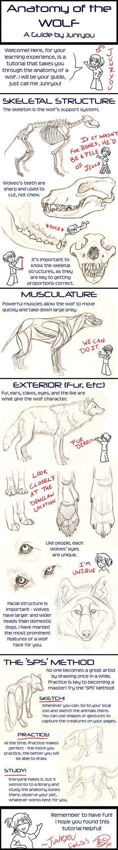 Anatomy of a Wolf - A Tutorial by =Junryou-na-Kokoro on deviantART