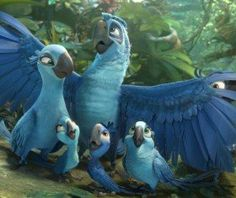 Rio 2 is another character-driven animated film that leaves the viewer with a feeling of joy that's sure to be a favorite of children worldwide. Film Rio, Rio 2 Movie, Movies 2014, New Movies, Disney Wallpaper, Cartoon Wallpaper, Rio Blue, Film Anime, Blue Sky Studios