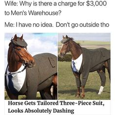 why is this horse more fashionable than I am