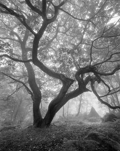 Deep in the Forest ... by ~TristanCampbell on deviantART