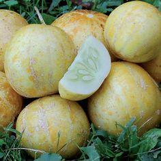 True Lemon Cucumber - Seed Savers Exchange