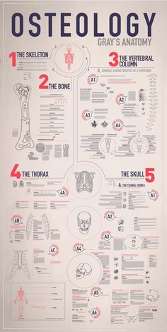 OSTEOLOGY // Infograph by Emmy de Leon, via Behance