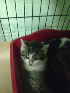 LULU HAS BEEN RESCUED BY CAT ADOPTION TEAM, WILMINGTON, FOR FOSTER CARE
