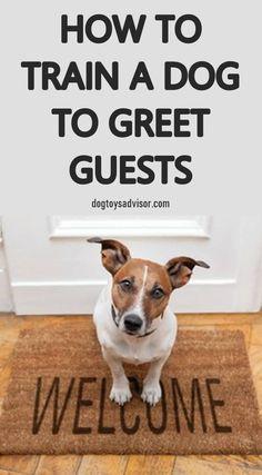 basic dog obedience training tips 5154941358 Training Apps, Puppy Training Tips, Training Your Puppy, Training Classes, Training Videos, Potty Training, Agility Training, Leash Training, Crate Training
