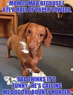 Some Helpful Ideas For Training Your Dog. Loving your dog does not mean you are willing to let him go hog wild on your possessions. That said, your dog doesn't feel the same way. Dachshund Funny, Dachshund Quotes, Dachshund Shirt, Dachshund Puppies, Dachshund Love, Funny Dogs, Dogs And Puppies, Daschund, Piebald Dachshund
