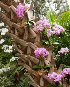 Orchids [Moth-orchid: Phalaenopsis] planted in the old leaf-bases of a palm tree offer a serenely colorful-effect. Moth Orchid, Orchid Plants, Exotic Plants, Exotic Flowers, Tropical Flowers, Beautiful Flowers, Orquideas Cymbidium, Orchid Show, Growing Orchids