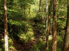 El riachuelo, casi seco, sigue, como hace milenios, amamantando al bosque viejo. Los olores del otoño se disuelven apaciblemente en la tarde amarilla y cálida. Una tímida lluvia de hojas sonrojadas empapa de colores las veredas y los prados. Entre la diáfana atmósfera, quieta de viento sur, los reflejos de un sol moribundo juguetean con la arboleda, con el arroyo, con los musgos y los helechos. Flotan gotas de otoño en las aguas aquietadas.