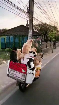 Funny Animal Videos, Cute Funny Animals, Cute Baby Animals, Animals And Pets, Crazy Animals, Funny Videos, Super Cute Puppies, Cute Dogs And Puppies, Doggies
