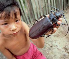Wussten Sie … das der Riesenbockkäfer alias Titanus Giganteus der größte Käfer der Welt ist? Er erreicht eine Körpergröße von bis zu20 cm. Er gehört zur Familie der Bockkäfer, ist ...