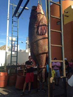 Humongous grouper (or snapper?), the trophy fish of a life time