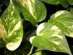 11 plantas que vão purificar o ar de sua casa e diminuir as crises de alergia | Cura pela Natureza.com.br
